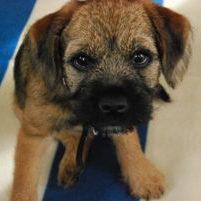 Alfie the pup